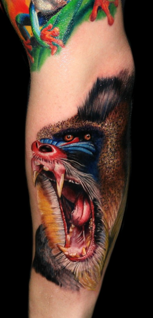 Awesome colorful baboon tattoo on arm