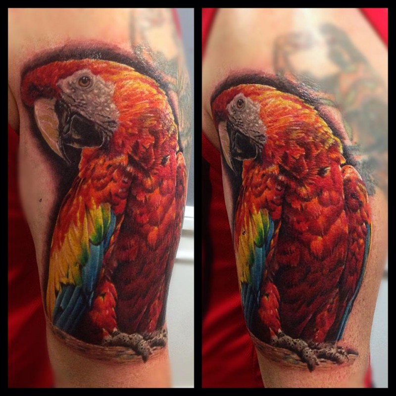 Colored Realism style shoulder tattoo of big parrot