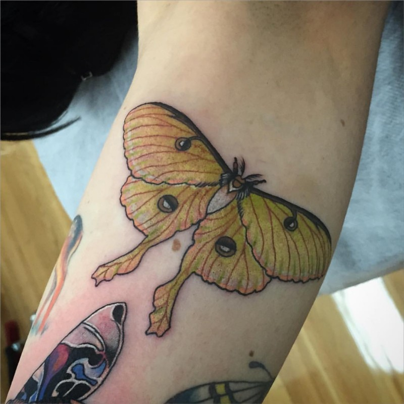 Small beautiful looking arm tattoo of flying butterfly