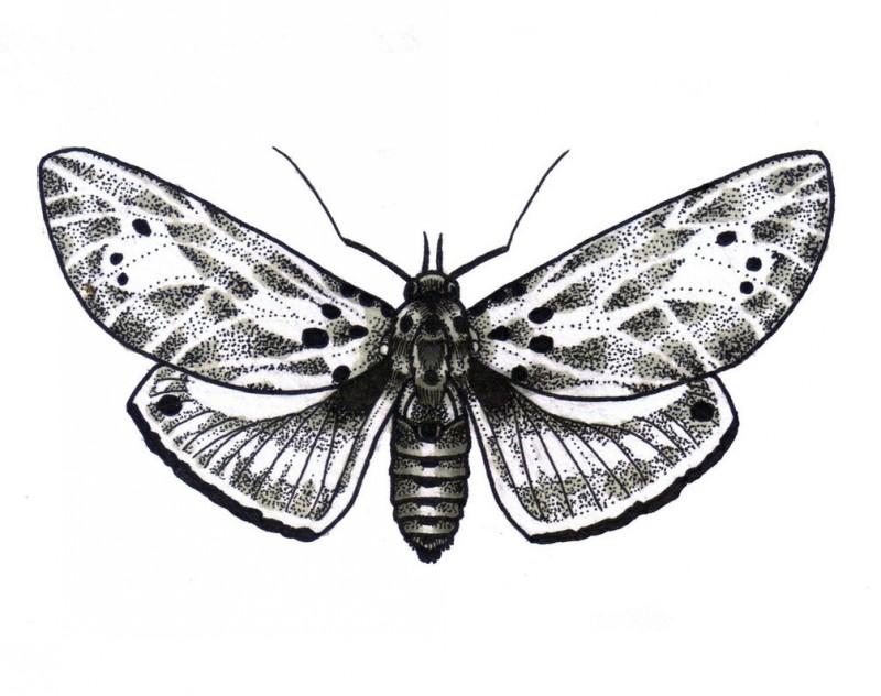 Amazing grey moth tattoo design by Enjoy