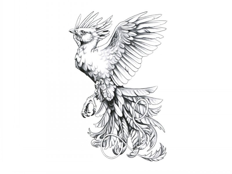 Amazing Little Grey Ink Flying Phoenix Tattoo Design