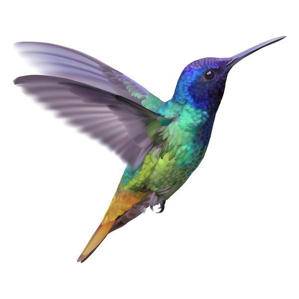Amazing rainbow hummingbird tattoo design