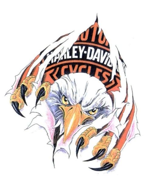 american harley davidson eagle tearing white background tattoo design. Black Bedroom Furniture Sets. Home Design Ideas
