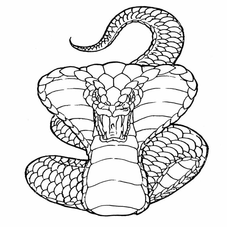 Angry Outline Cobra Snake Tattoo Design Tattooimagesbiz
