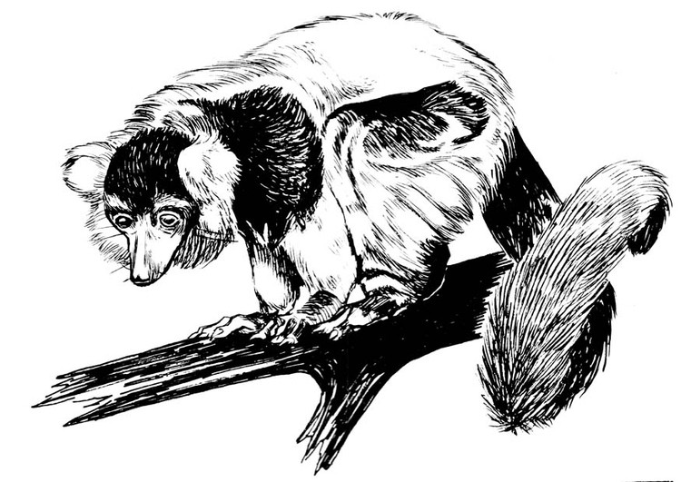 Awesome black-ink lemur sitting on branch tattoo design