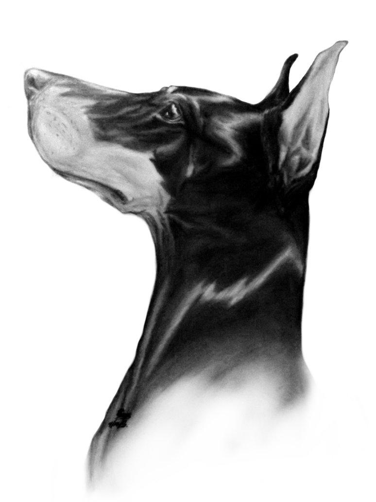 Awesome black doberman head in profile tattoo design by Burdmcleod