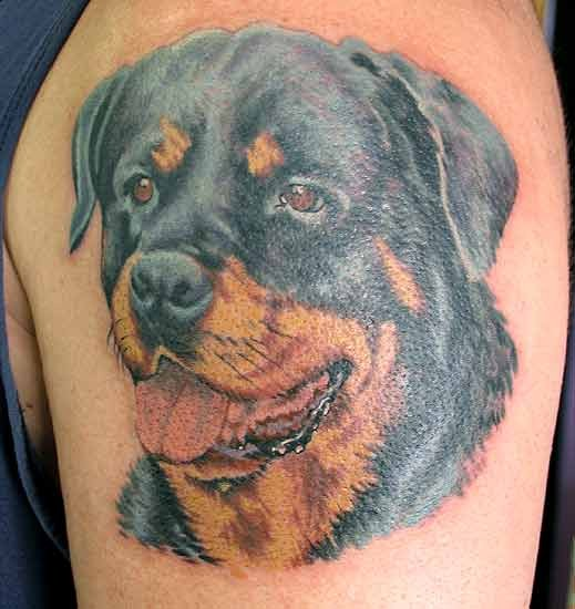 Awesome colorful rottweiler head tattoo on upper arm