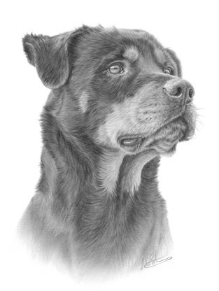Awesome realistic grey-ink rottweiler portrait tattoo design