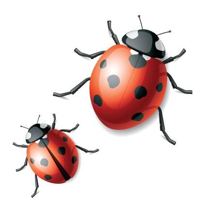 Beautiful black-and-red crawling ladybug couple tattoo design