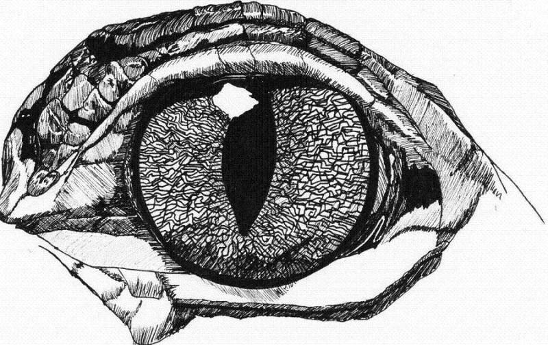Beautiful concentrated black-and-white reptile eye tattoo design