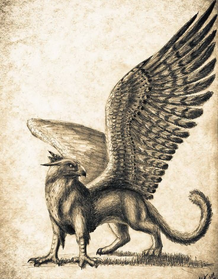 Beautiful pencilwork griffin looking on something tattoo design