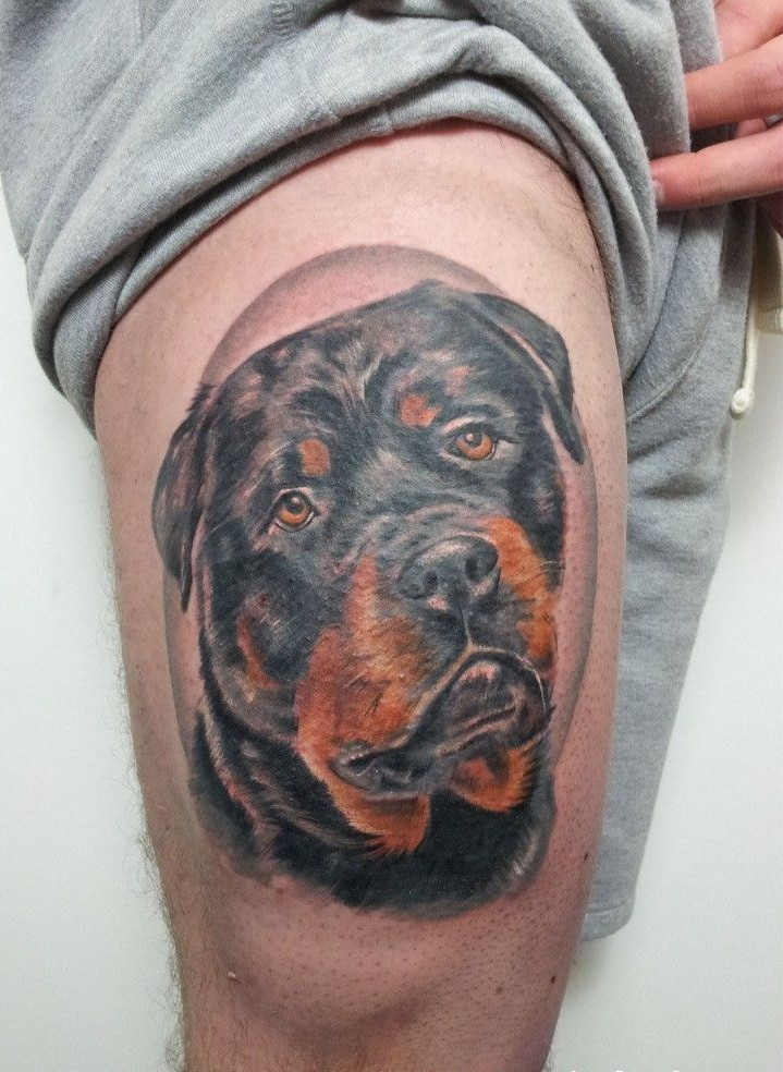 bellissimo realistico colorato testa di Rottweiler tatuaggio su coscia