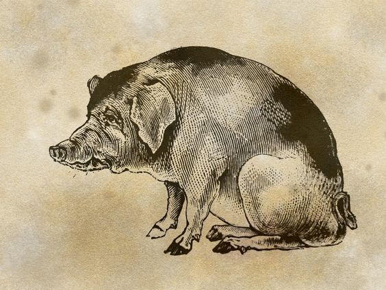 Big black-and-white spotted sitting pig tattoo design