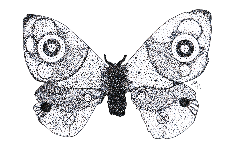 Big dotwork moth tattoo design by Jaydecastro