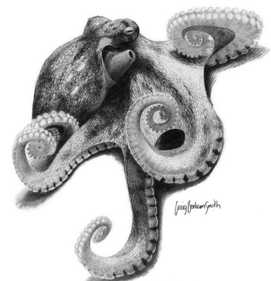 Big grey-color octopus with curled tentacles tattoo design