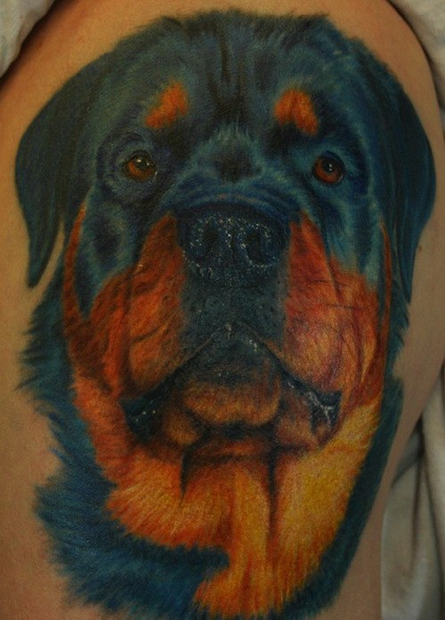 Big lovable color-ink rottweiler head tattoo
