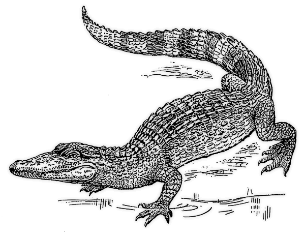 Blaack-and-white reptile walking on lake beach tattoo design