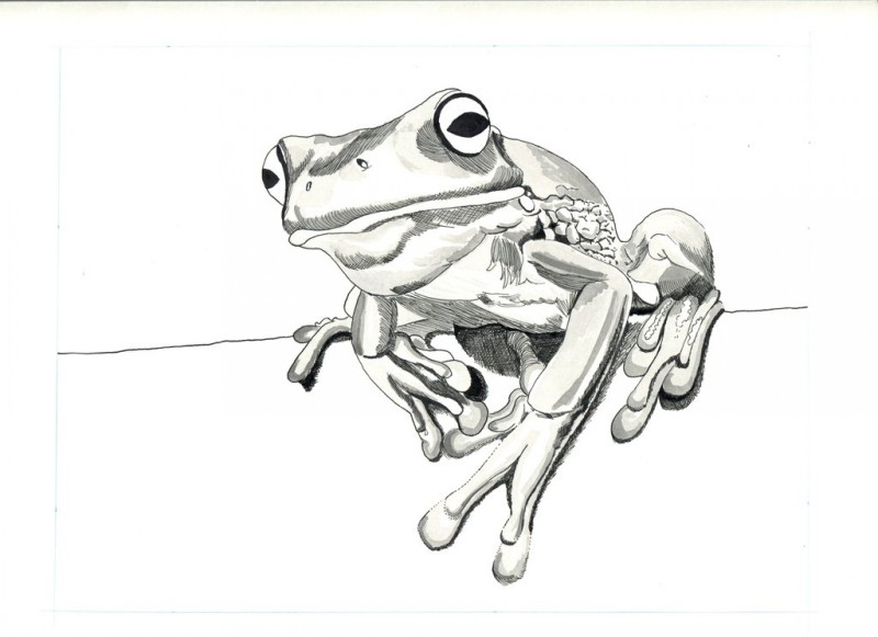Black and grey ink resting frog tattoo design by gumie35 for Celtic frog tattoo designs