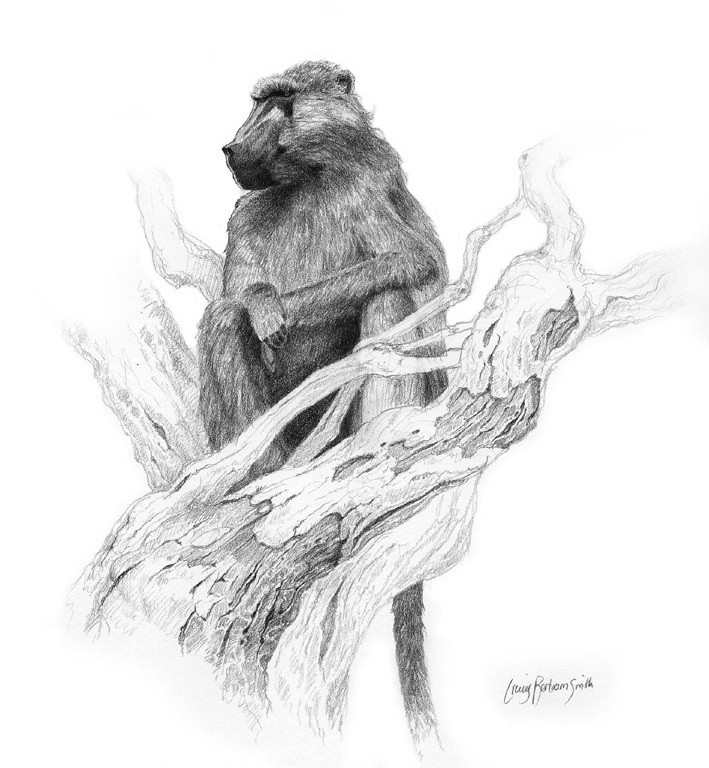Black-and-white baboon sitting on thick tree branch tattoo design