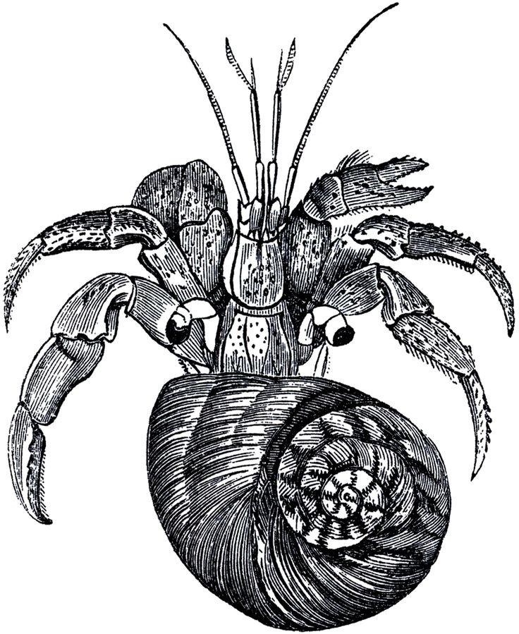 Black-and-white hermit crab turning up tattoo design