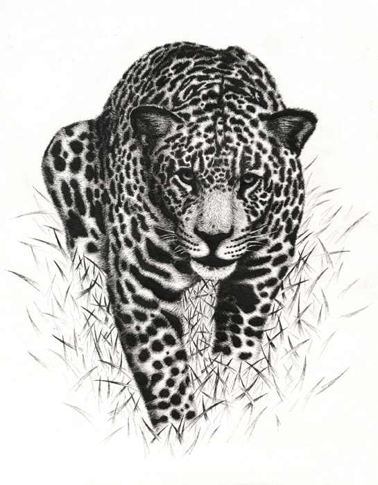 Black-and-white jaguar walking in the grass tattoo design