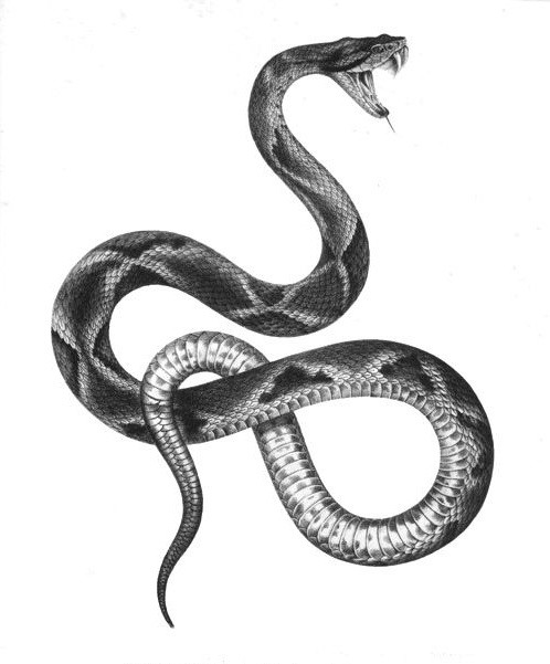Black-and-white realistic hissing reptile tattoo design