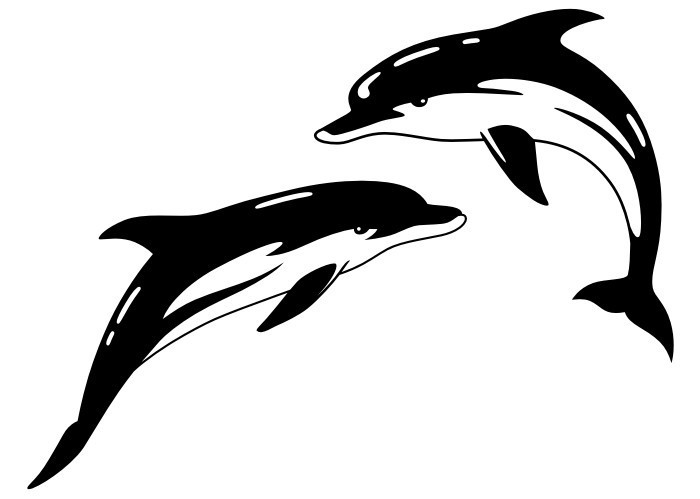 Black-and-white serious-faced dolphin couple tattoo design