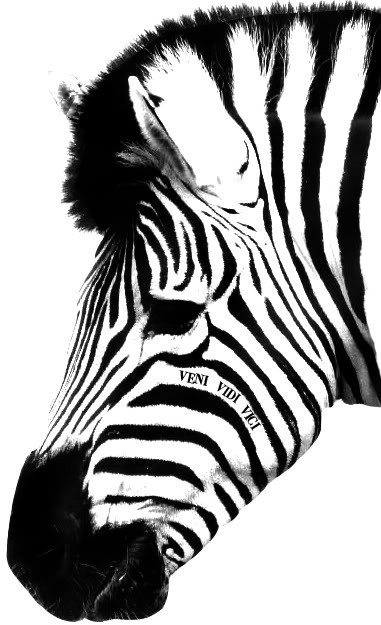 Black-and-white zebra head with latin quote tattoo design