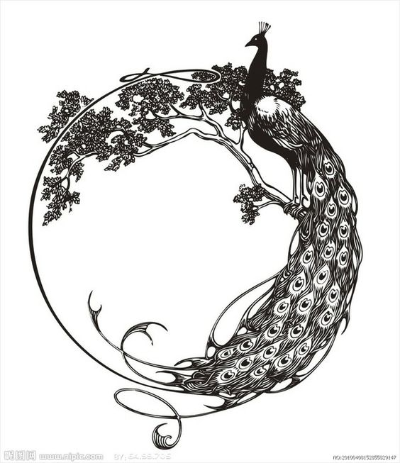Black-ink peacock sitting in curled tree branch tattoo design