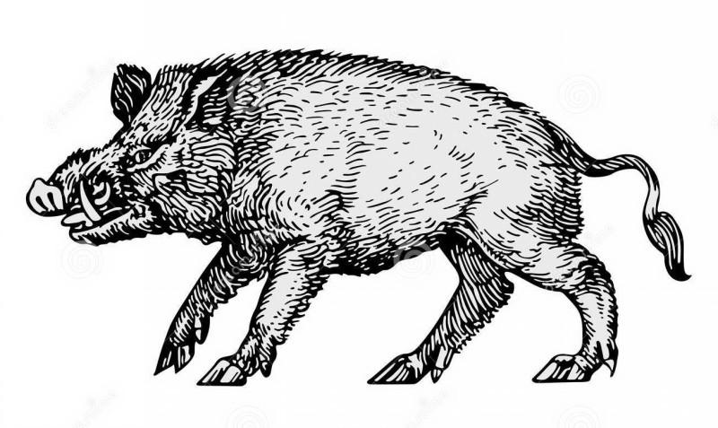 Black-ink wild pig tattoo design