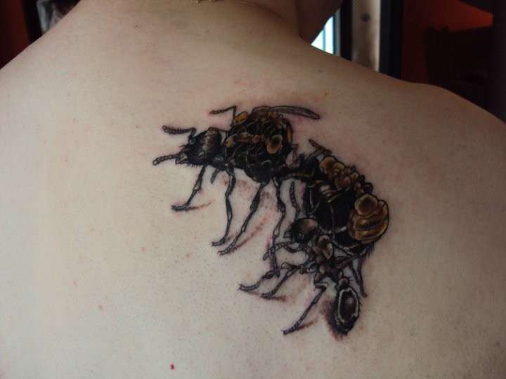 Black and brown ant tattoo on upper back
