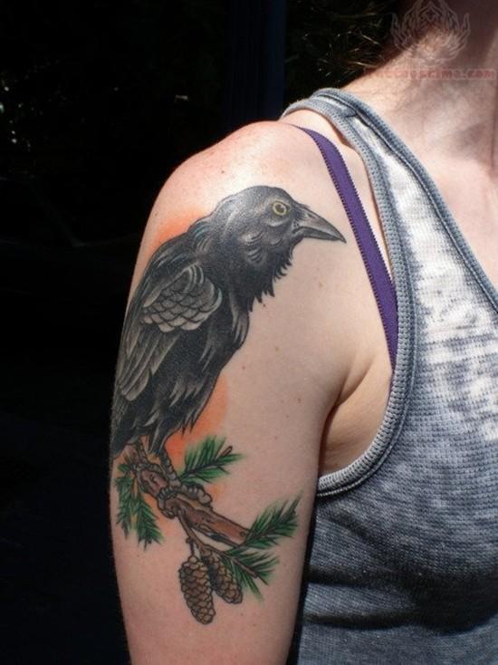 corvo nero con urti su un ramo di pino tatuaggio su spalla