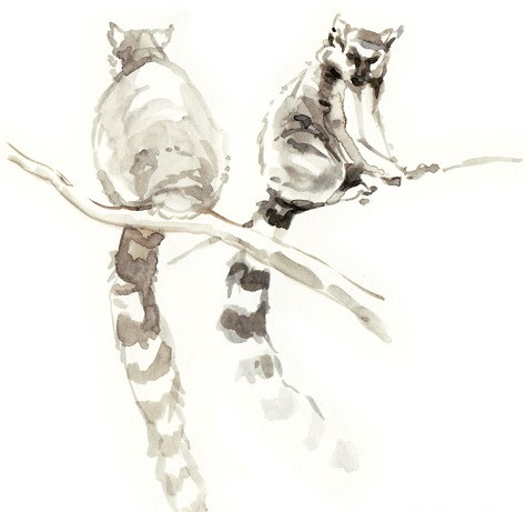 Black watercolor lemur couple sitting on branches tattoo design