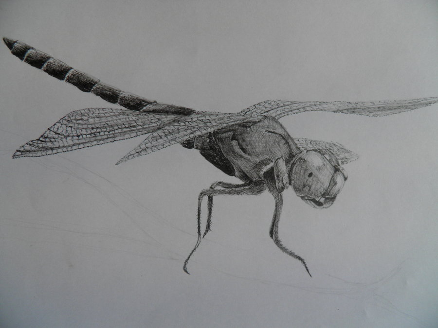 Blak-and-white flying dragonfly tattoo design by Shadowoner