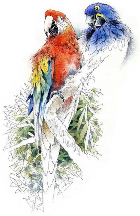 Blue and red parrots and uncolored tree branch tattoo design