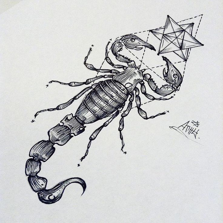Bonny black-and-white scorpion with sacred drawings tattoo design