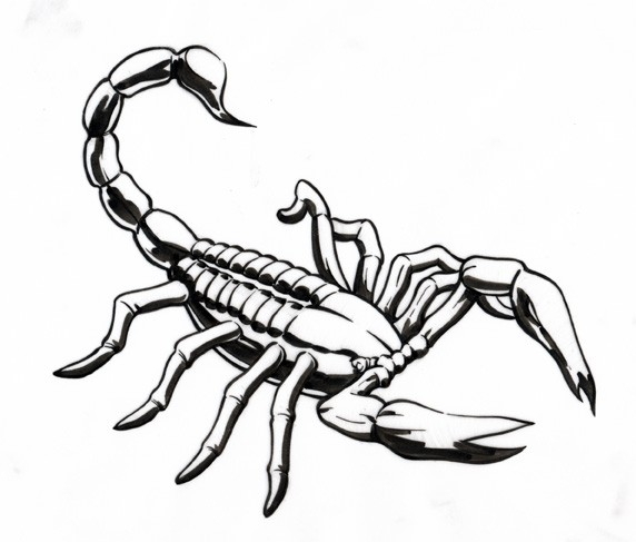 bonny calm outline scorpion tattoo design. Black Bedroom Furniture Sets. Home Design Ideas