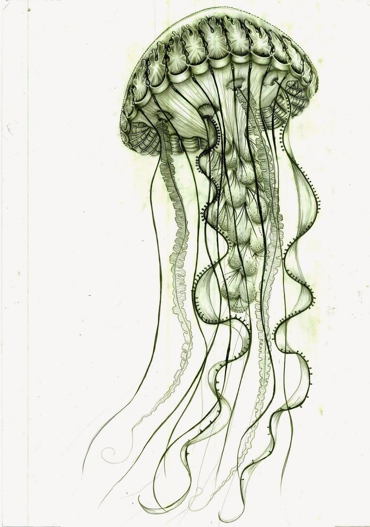 Bonny green jellyfish tattoo design