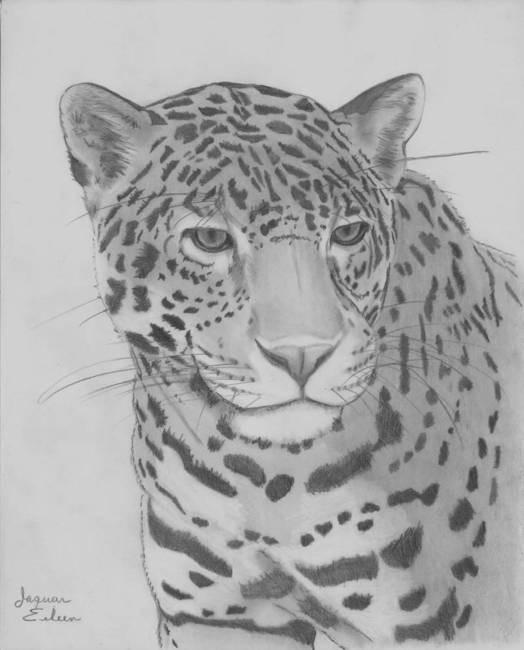 Bonny grey-ink pencilwork jaguar tattoo design
