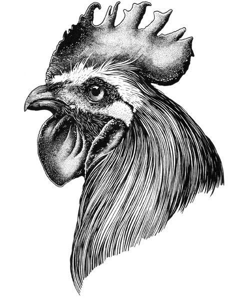Calm grey-ink rooster portrait in profile tattoo design