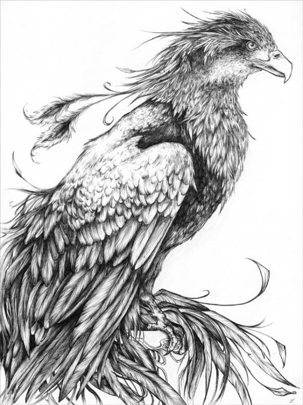 Calm Realistic Black And White Waiting Phoenix Tattoo Design together with Coloring Page Of Giraffe Face X together with Wylr Eh together with Three Adelie Penguins Coloring Page besides Giraffe Coloring Page. on giraffe coloring pages realistic