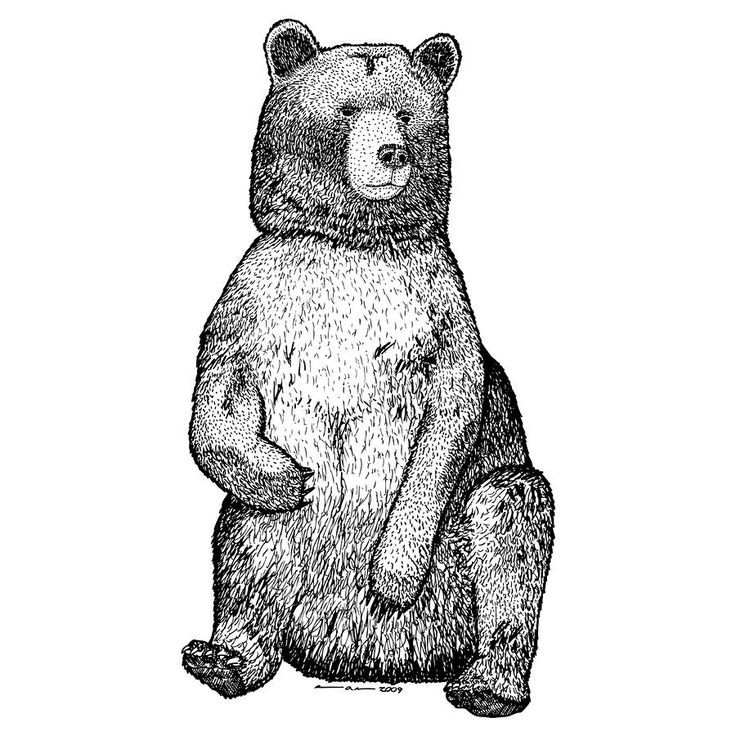 Charming grey-ink sitting grizzly bear tattoo design