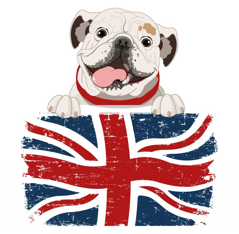 Cheerful colored bulldog and english flag tattoo design