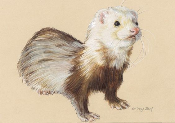 Chic brown-and-white rodent tattoo design