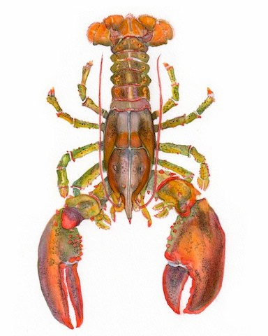Colorful lobster water animal tattoo design