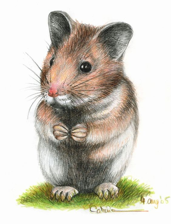 Colorful pencil work rodent standing on grass tattoo design