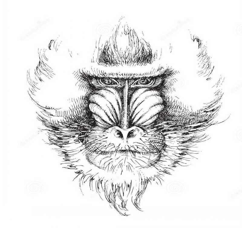 Concentrated grey-ink baboon head tattoo design