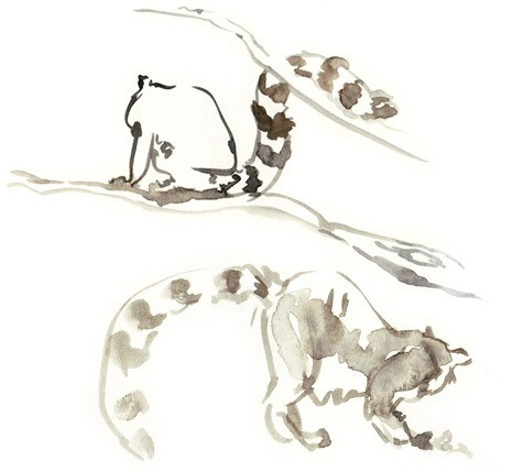 Cool brown watercolor lemurs jumping on tree branches tattoo design