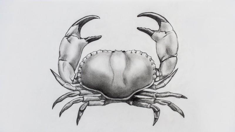 Cool grey pencol work crab tattoo design