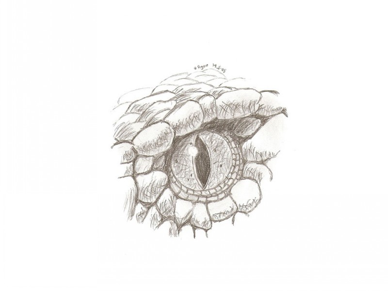 Cool pencilwork reptile eye fragment tattoo design